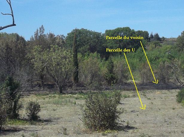 JdB de 4 hectares de pâtures dans le SUD : Janvier à la diète... + expérimentation 143aou10