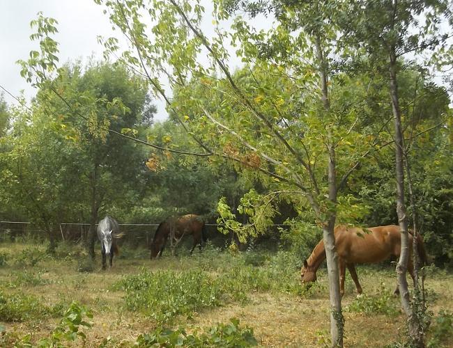 JdB de 4 hectares de pâtures dans le SUD : Janvier à la diète... + expérimentation 146aou10