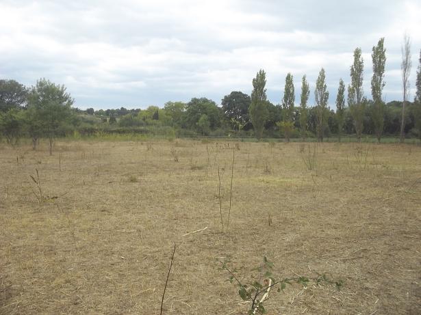 JdB de 4 hectares de pâtures dans le SUD : Janvier à la diète... + expérimentation 149sep10