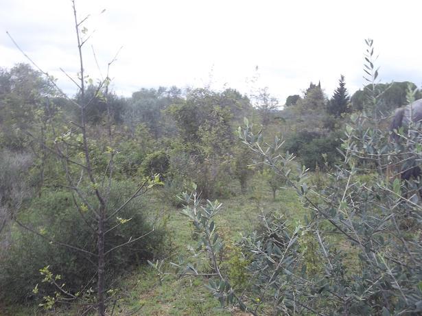 JdB de 4 hectares de pâtures dans le SUD : Janvier à la diète... + expérimentation 154oct10