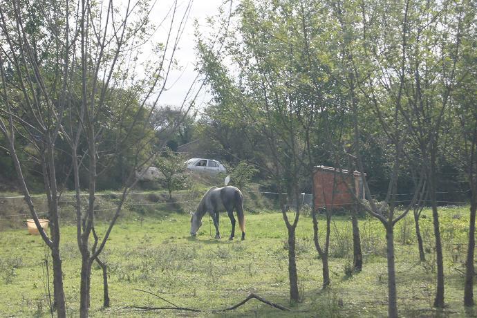 JdB de 4 hectares de pâtures dans le SUD : Janvier à la diète... + expérimentation 161oct10