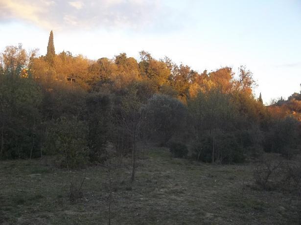 JdB de 4 hectares de pâtures dans le SUD : Janvier à la diète... + expérimentation 168nov10
