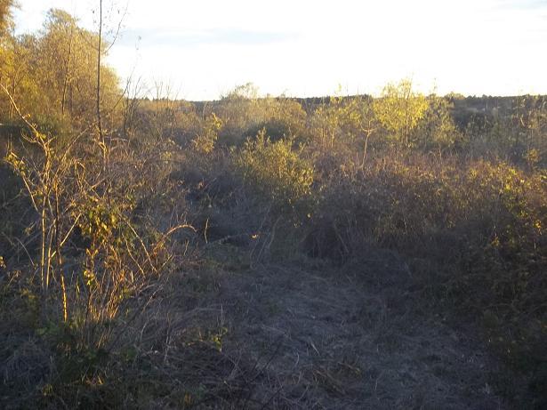 JdB de 4 hectares de pâtures dans le SUD : Janvier à la diète... + expérimentation 168nov11