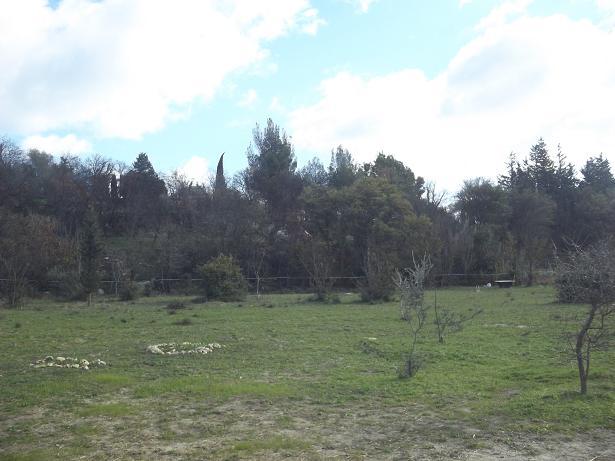 JdB de 4 hectares de pâtures dans le SUD : Janvier à la diète... + expérimentation 176dec10