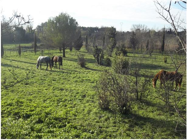 JdB de 4 hectares de pâtures dans le SUD : Timide reprise après 8 mois de sécheresse 176dec11