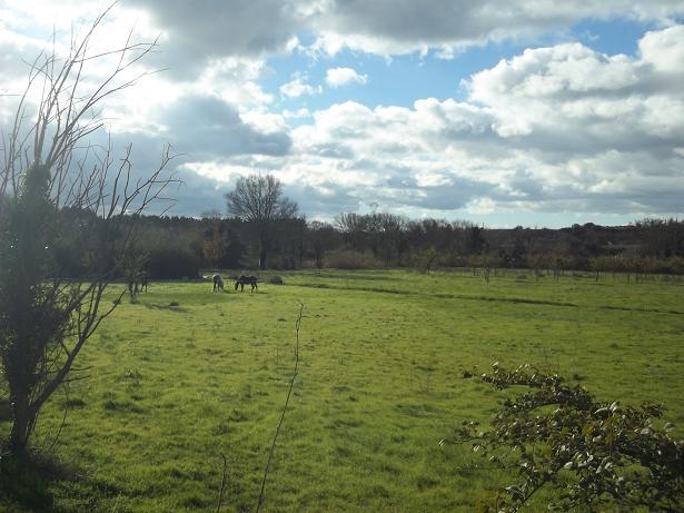 JdB de 4 hectares de pâtures dans le SUD : Janvier à la diète... + expérimentation 177dec10
