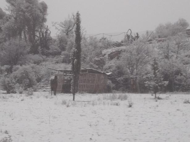 JdB de 4 hectares de pâtures dans le SUD : Janvier à la diète... + expérimentation 192jan10