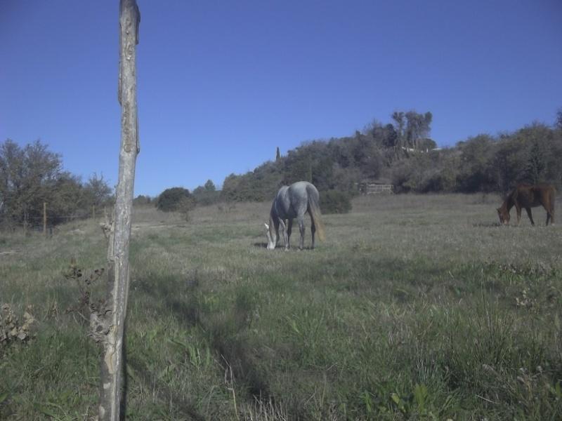 JdB de 4 hectares de pâtures dans le SUD : Janvier à la diète... + expérimentation 2013de12