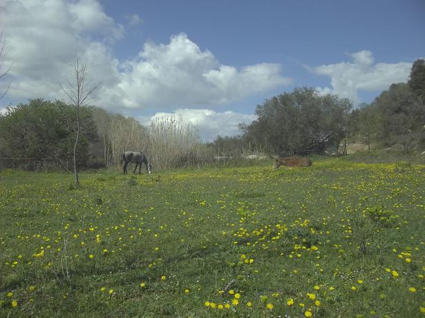 JdB de 4 hectares de pâtures dans le SUD : Timide reprise après 8 mois de sécheresse 201mar10