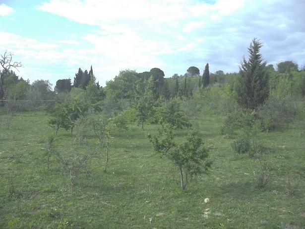 JdB de 4 hectares de pâtures dans le SUD : Timide reprise après 8 mois de sécheresse 229avr10