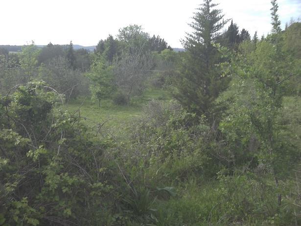 JdB de 4 hectares de pâtures dans le SUD : Timide reprise après 8 mois de sécheresse 230avr10
