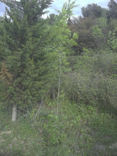 JdB de 4 hectares de pâtures dans le SUD : Janvier à la diète... + expérimentation 231avr10