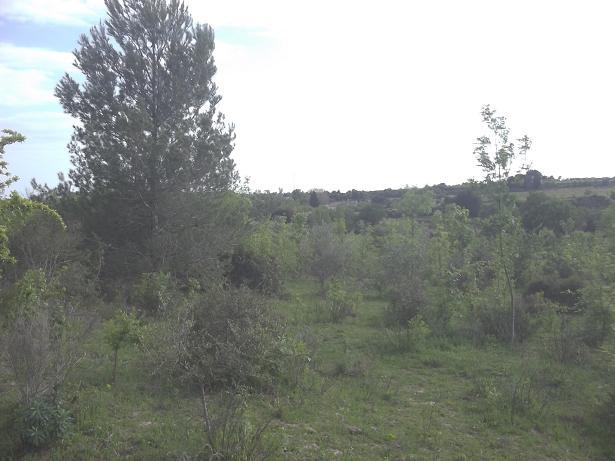 JdB de 4 hectares de pâtures dans le SUD : Janvier à la diète... + expérimentation 232avr10