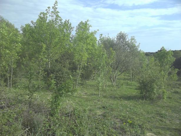 JdB de 4 hectares de pâtures dans le SUD : Timide reprise après 8 mois de sécheresse 233avr10