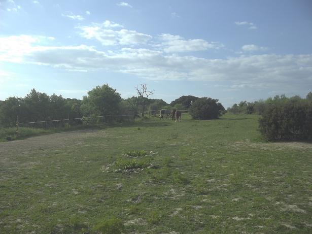 JdB de 4 hectares de pâtures dans le SUD : Janvier à la diète... + expérimentation 235avr10