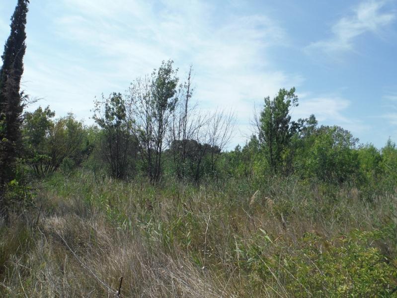 JdB de 4 hectares de pâtures dans le SUD : Timide reprise après 8 mois de sécheresse Dscf1411