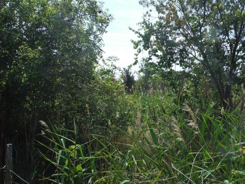 JdB de 4 hectares de pâtures dans le SUD : Timide reprise après 8 mois de sécheresse Dscf1412