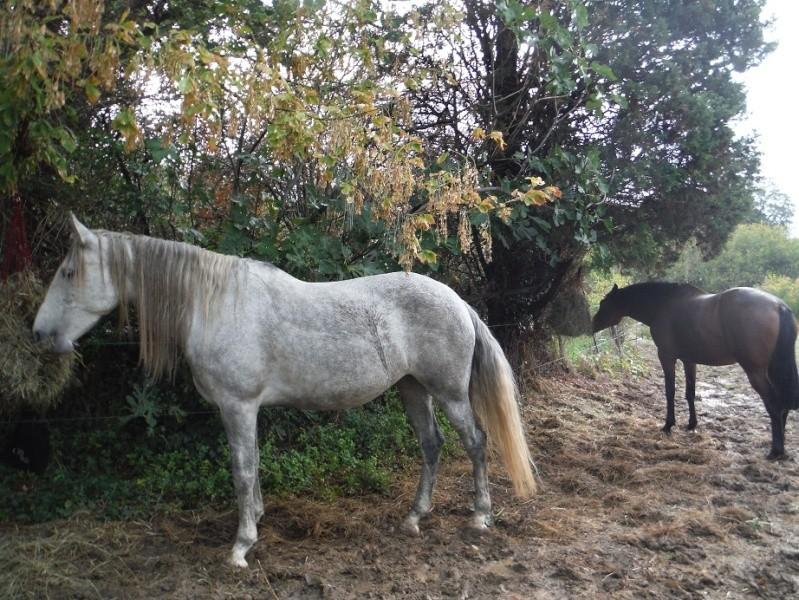 JdB de 4 hectares de pâtures dans le SUD : Timide reprise après 8 mois de sécheresse Dscf1510