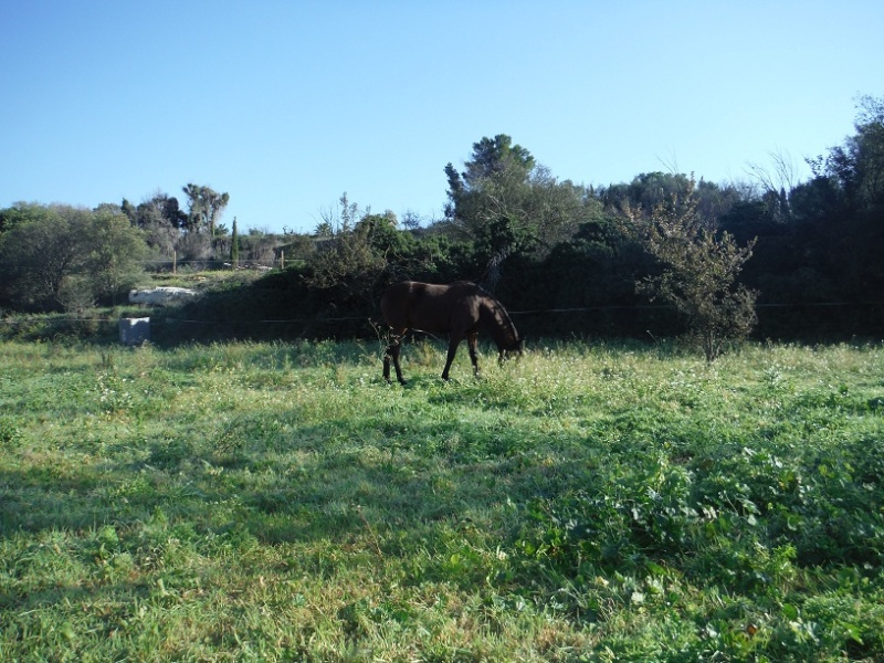 JdB de 4 hectares de pâtures dans le SUD : Janvier à la diète... + expérimentation Dscf1610