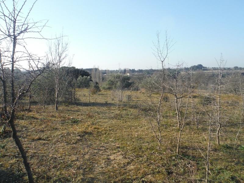 JdB de 4 hectares de pâtures dans le SUD : Timide reprise après 8 mois de sécheresse Dscf2110
