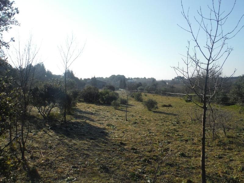JdB de 4 hectares de pâtures dans le SUD : Janvier à la diète... + expérimentation Dscf2111