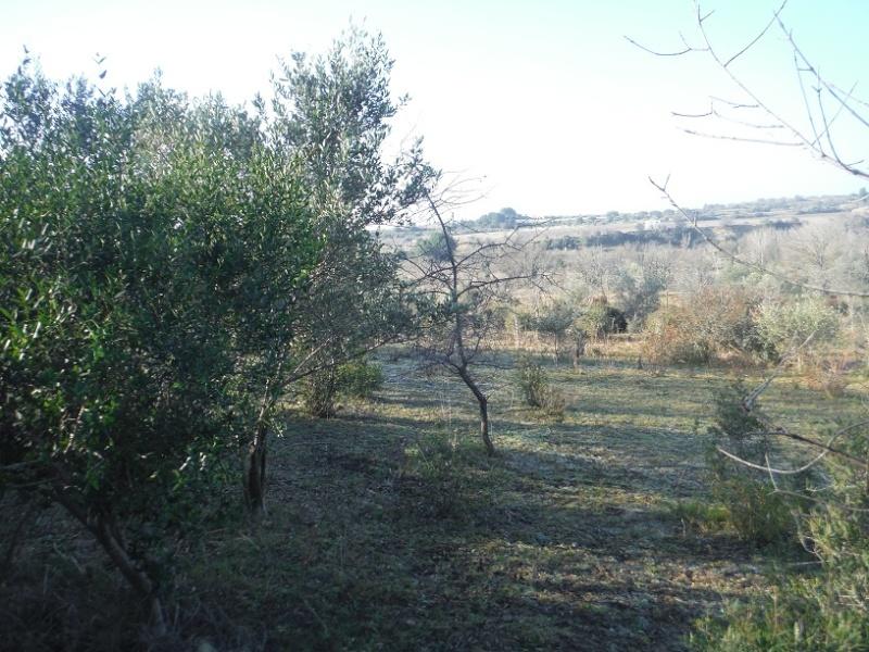 JdB de 4 hectares de pâtures dans le SUD : Timide reprise après 8 mois de sécheresse Dscf2112