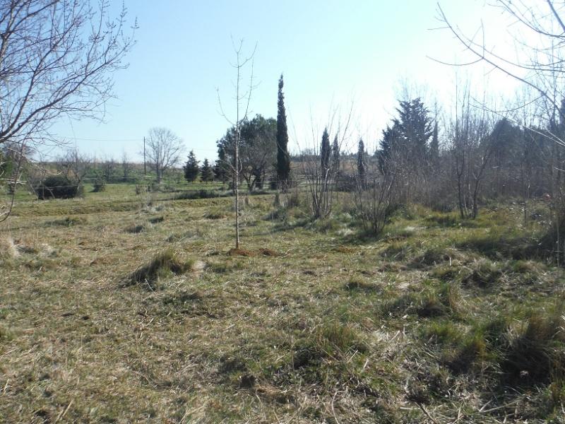 JdB de 4 hectares de pâtures dans le SUD : Timide reprise après 8 mois de sécheresse Dscf2410
