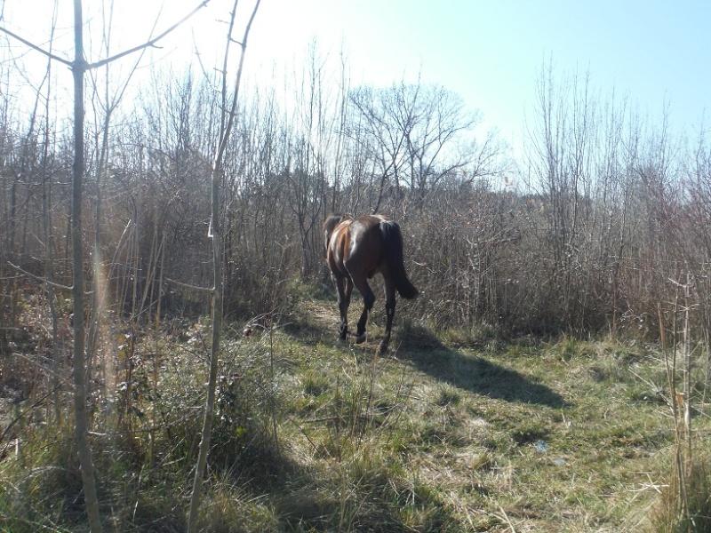 JdB de 4 hectares de pâtures dans le SUD : Janvier à la diète... + expérimentation Dscf2411