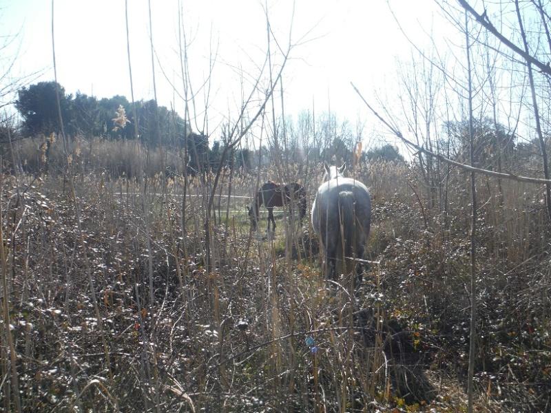 JdB de 4 hectares de pâtures dans le SUD : Janvier à la diète... + expérimentation Dscf2412