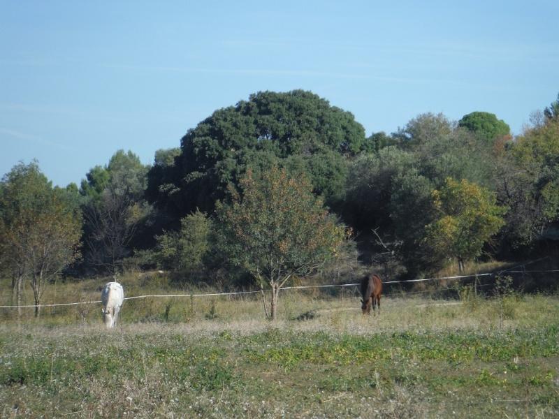 JdB de 4 hectares de pâtures dans le SUD : Janvier à la diète... + expérimentation Dscf3110