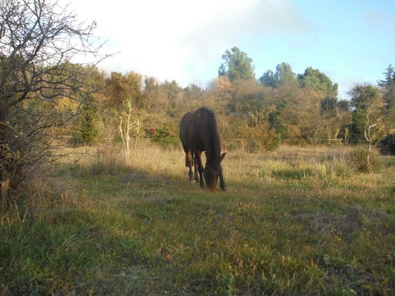 JdB de 4 hectares de pâtures dans le SUD : Timide reprise après 8 mois de sécheresse Dscf3111