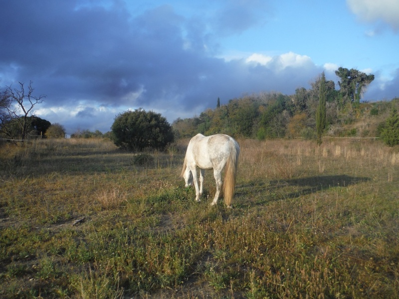 JdB de 4 hectares de pâtures dans le SUD : Timide reprise après 8 mois de sécheresse Dscf3112