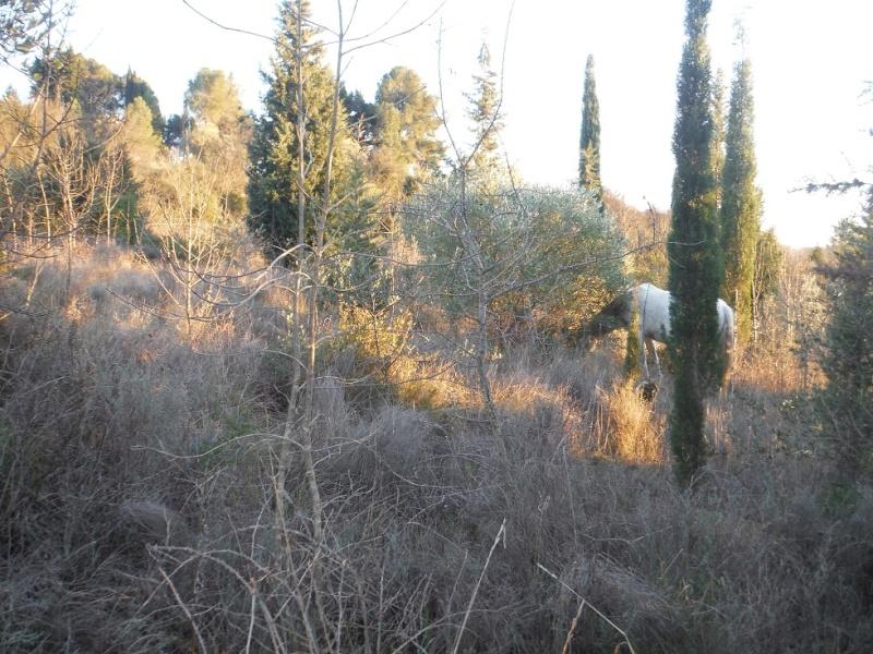 JdB de 4 hectares de pâtures dans le SUD : Janvier à la diète... + expérimentation Dscf3210