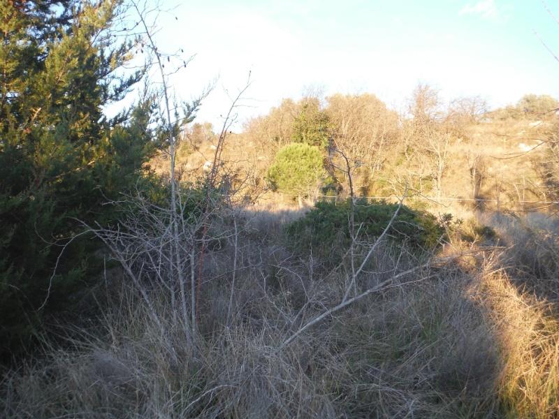 JdB de 4 hectares de pâtures dans le SUD : Timide reprise après 8 mois de sécheresse Dscf3211