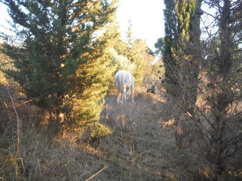 JdB de 4 hectares de pâtures dans le SUD : Timide reprise après 8 mois de sécheresse Dscf3212