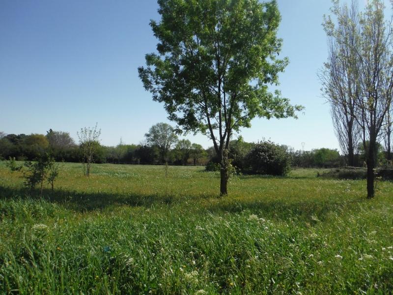 JdB de 4 hectares de pâtures dans le SUD : Timide reprise après 8 mois de sécheresse Dscf3518