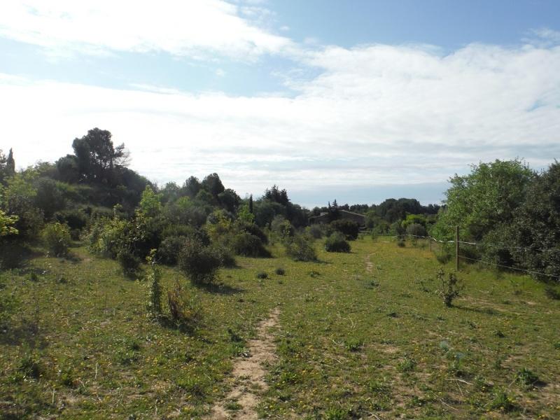 JdB de 4 hectares de pâtures dans le SUD : Timide reprise après 8 mois de sécheresse Dscf3611