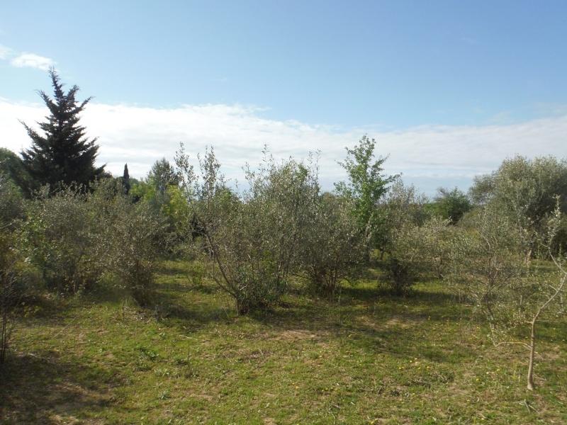 JdB de 4 hectares de pâtures dans le SUD : Timide reprise après 8 mois de sécheresse Dscf3612