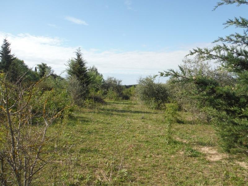JdB de 4 hectares de pâtures dans le SUD : Timide reprise après 8 mois de sécheresse Dscf3613