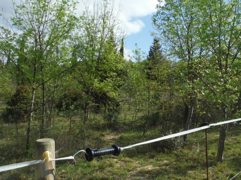 JdB de 4 hectares de pâtures dans le SUD : Janvier à la diète... + expérimentation Dscf3614