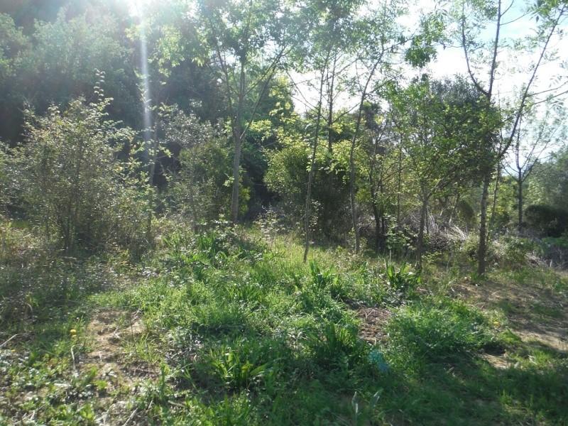 JdB de 4 hectares de pâtures dans le SUD : Timide reprise après 8 mois de sécheresse Dscf3615