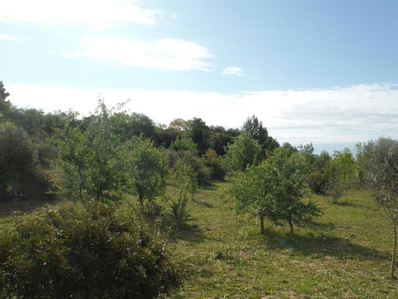 JdB de 4 hectares de pâtures dans le SUD : Timide reprise après 8 mois de sécheresse Dscf3616