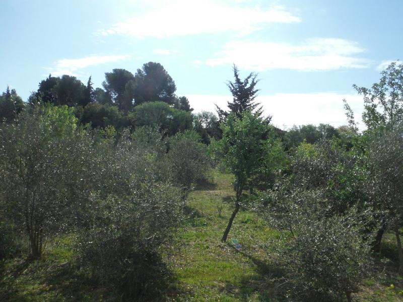 JdB de 4 hectares de pâtures dans le SUD : Timide reprise après 8 mois de sécheresse Dscf3617