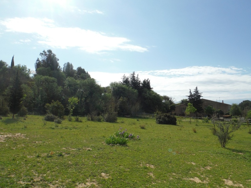 JdB de 4 hectares de pâtures dans le SUD : Janvier à la diète... + expérimentation Dscf3619