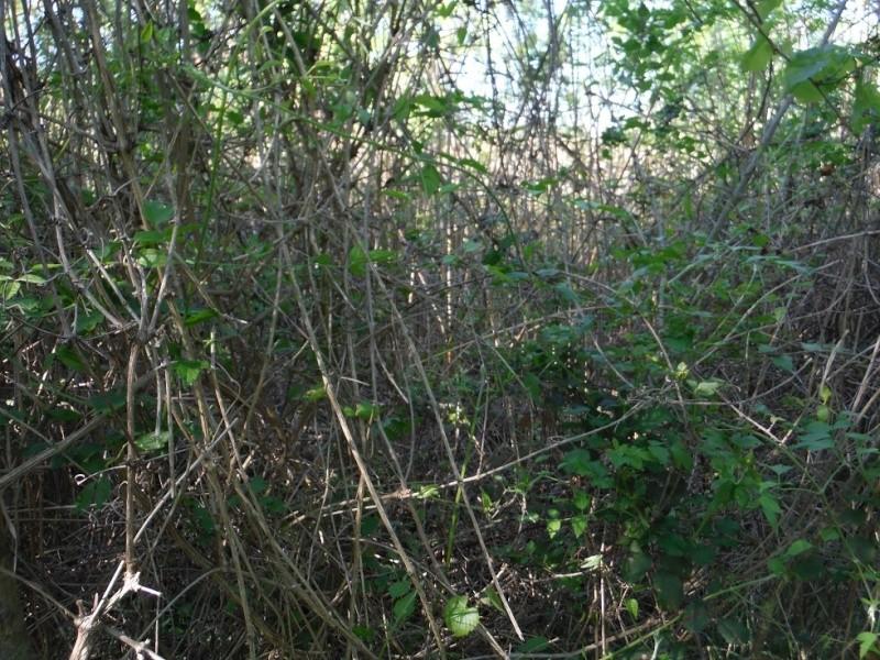 JdB de 4 hectares de pâtures dans le SUD : Timide reprise après 8 mois de sécheresse Dscf3710