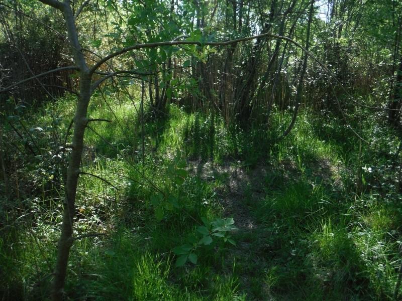 JdB de 4 hectares de pâtures dans le SUD : Janvier à la diète... + expérimentation Dscf3711