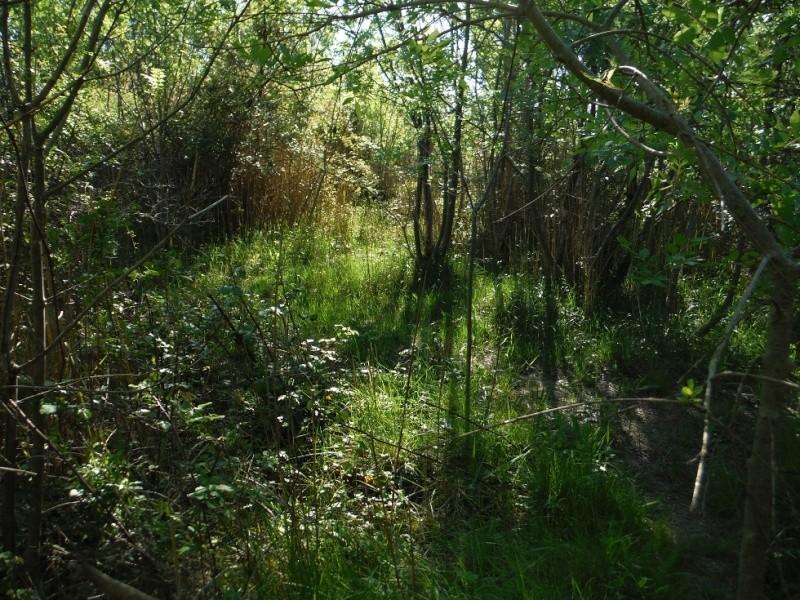 JdB de 4 hectares de pâtures dans le SUD : Janvier à la diète... + expérimentation Dscf3712