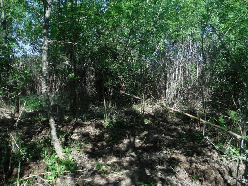 JdB de 4 hectares de pâtures dans le SUD : Timide reprise après 8 mois de sécheresse Dscf3713