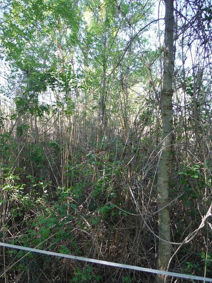 JdB de 4 hectares de pâtures dans le SUD : Janvier à la diète... + expérimentation Dscf3715