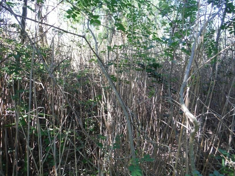 JdB de 4 hectares de pâtures dans le SUD : Janvier à la diète... + expérimentation Dscf3716